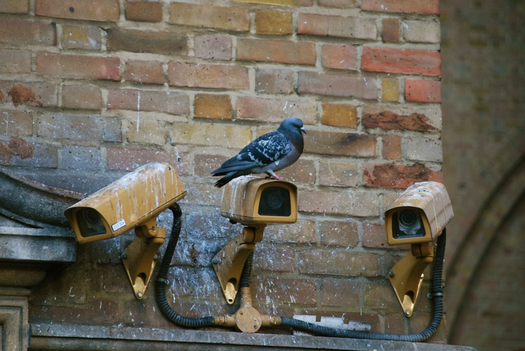 Wildlife Management Derry - Pest Control NI