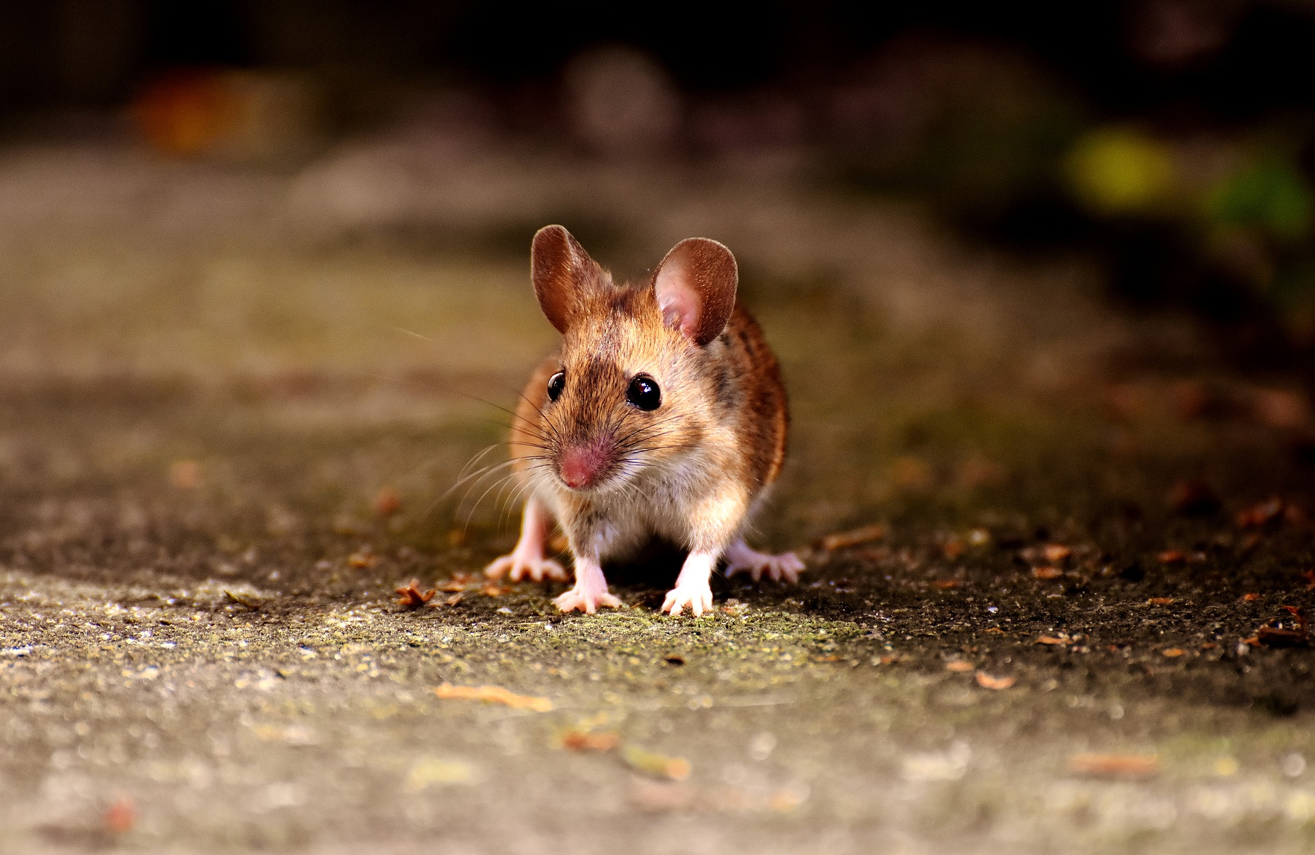 Read more about the article Pest Control NI – Rodent-proofing new homes