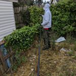 Wasp Control by Pest Control NI